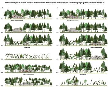 Guide sylvicole. Ministère des Forêts, de la Faune et des Parcs, Québec