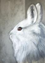 """Stephanie Frippiat Artiste Peintre """"Lièvre blanc"""""""